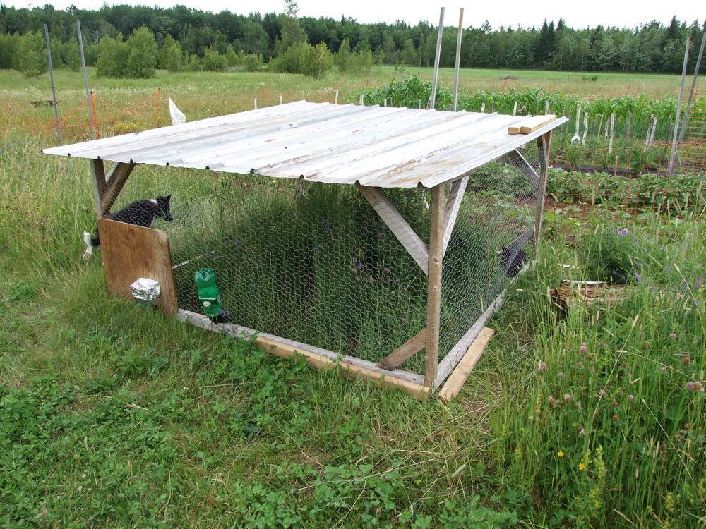 lapins pâturage cages 1