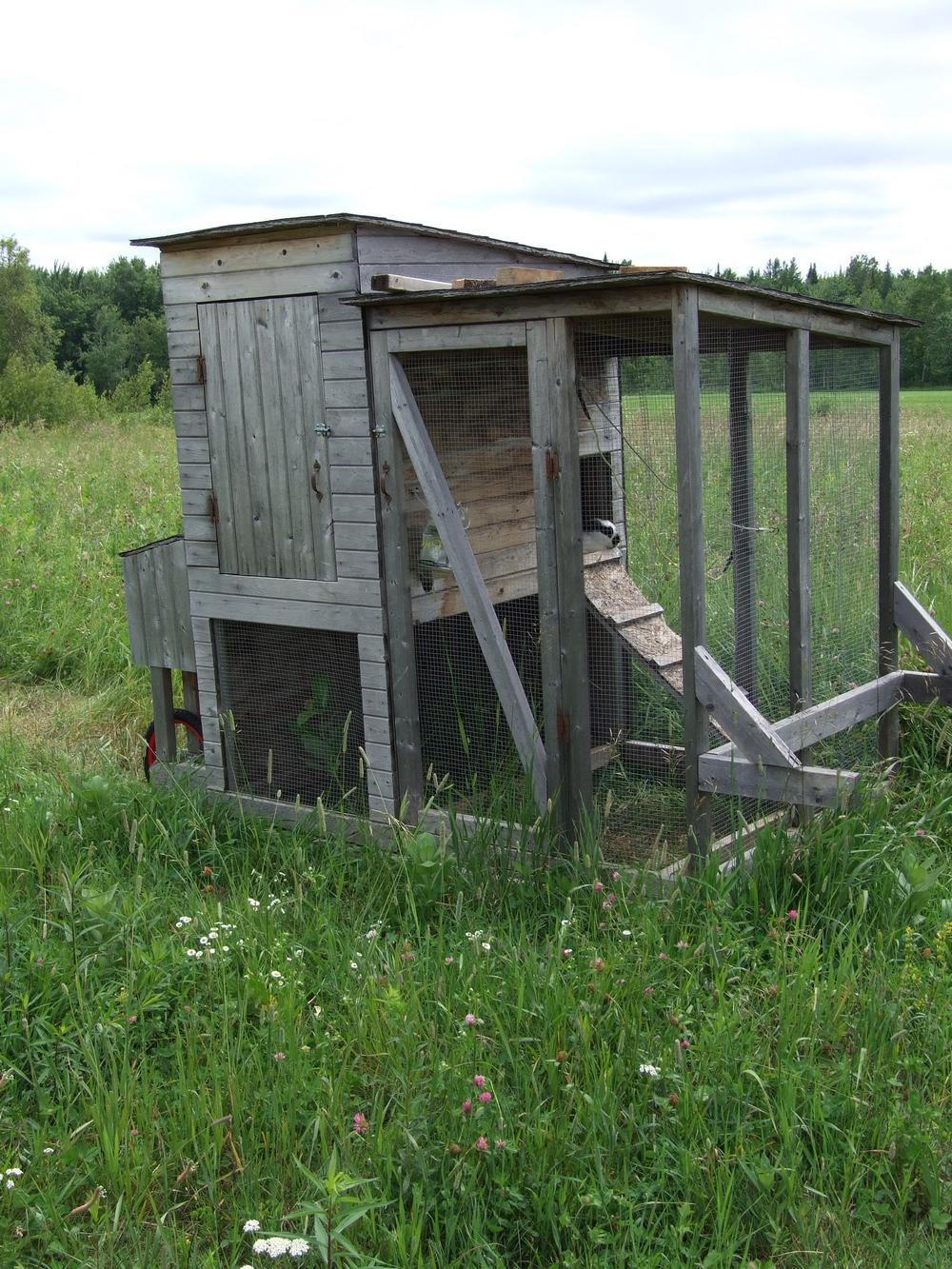 lapins pâturage cages 2