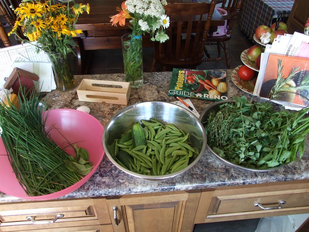 récoltes, légumes, fines herbes, verdures, cuisine