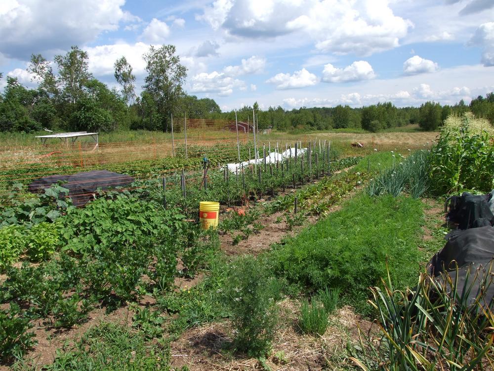 jardins, été, jardinage, maraîchage biologique, légumes, culture, agriculture bio