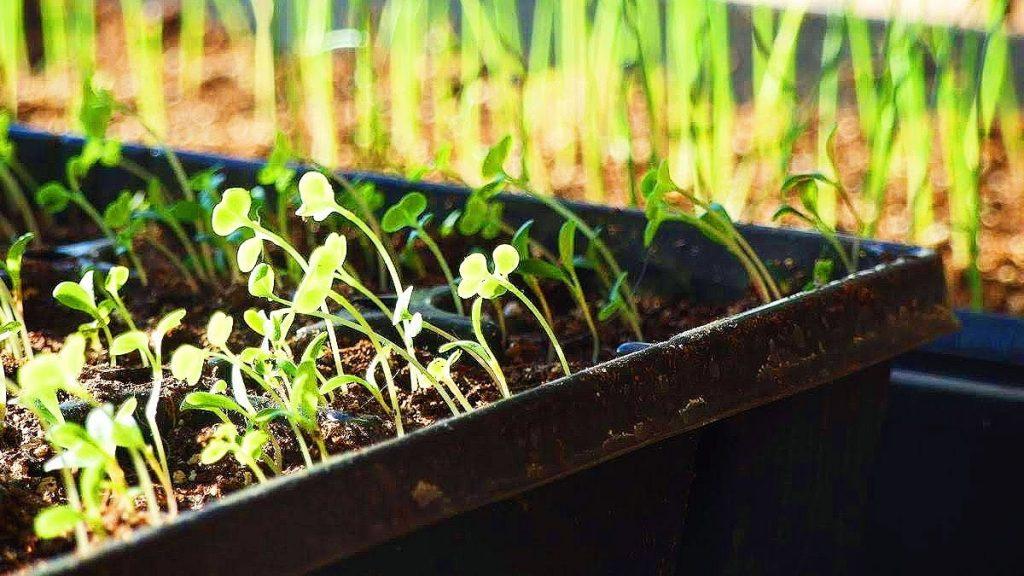 fleurs, semences, jardinage, agriculture, biologique, nature