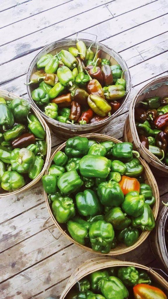 poivrons, agriculture, biologique