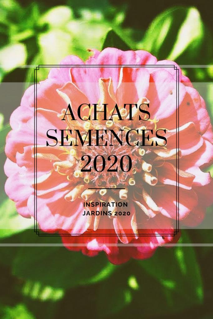 zinnias, fleurs, jardinage, culture