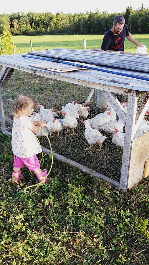 enfant-élevage-poulets-fermette