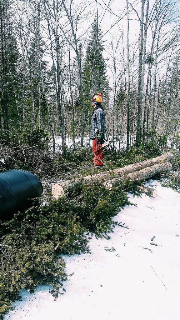forêt, bois, bûcheron, hiver, neige