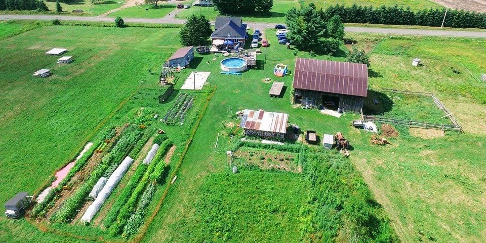 ferme, homestead, champs, jardins, vue aérienne