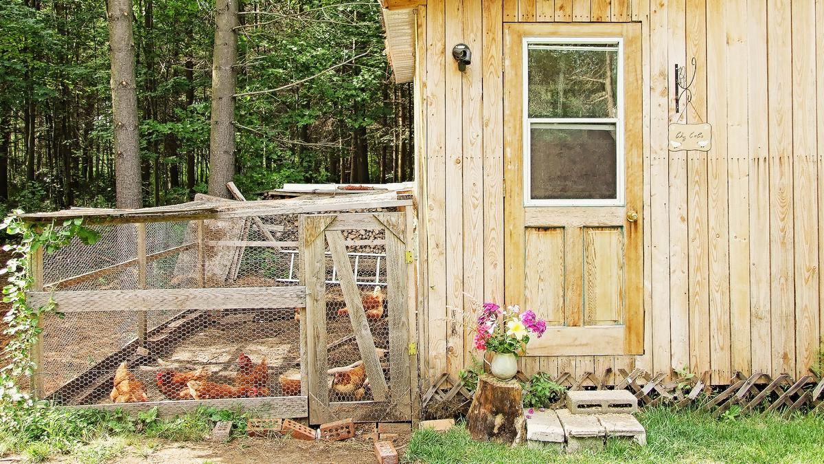 poulailler, poules, campagne, homestead, fermette