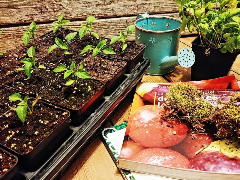 jardinage semis livre jardin
